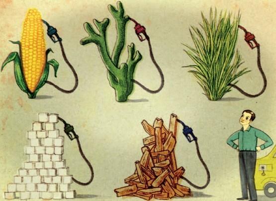 Трынь-трава